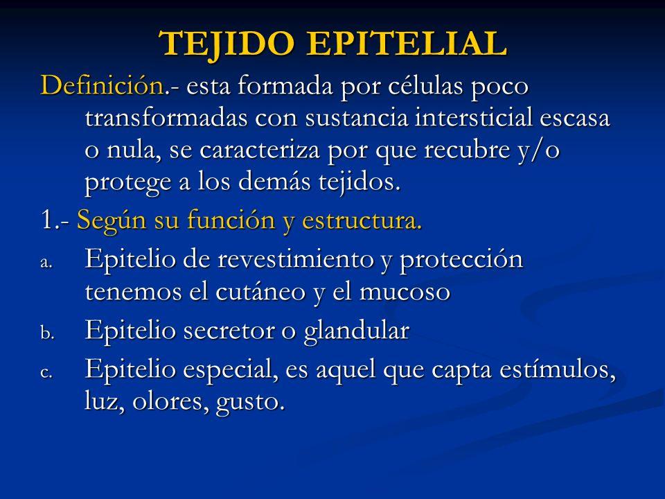 TEJIDO EPITELIAL Definición.- esta formada por células poco transformadas con sustancia intersticial escasa o nula, se caracteriza por que recubre y/o