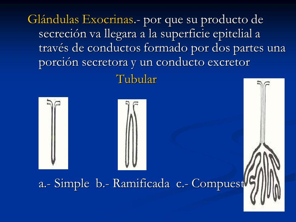 Glándulas Exocrinas.- por que su producto de secreción va llegara a la superficie epitelial a través de conductos formado por dos partes una porción s