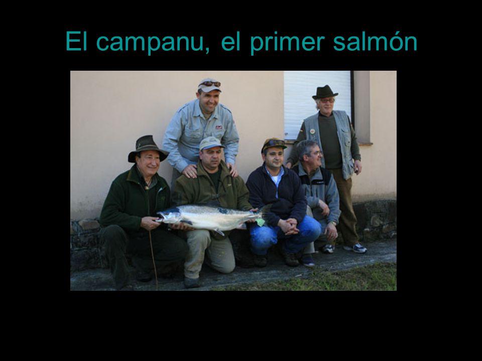 El campanu, el primer salmón