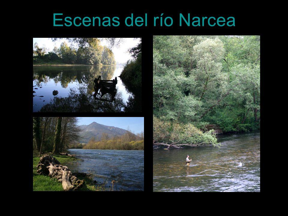 Escenas del río Narcea