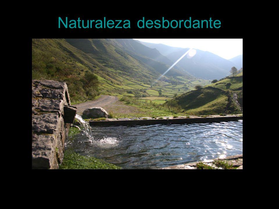 Naturaleza desbordante