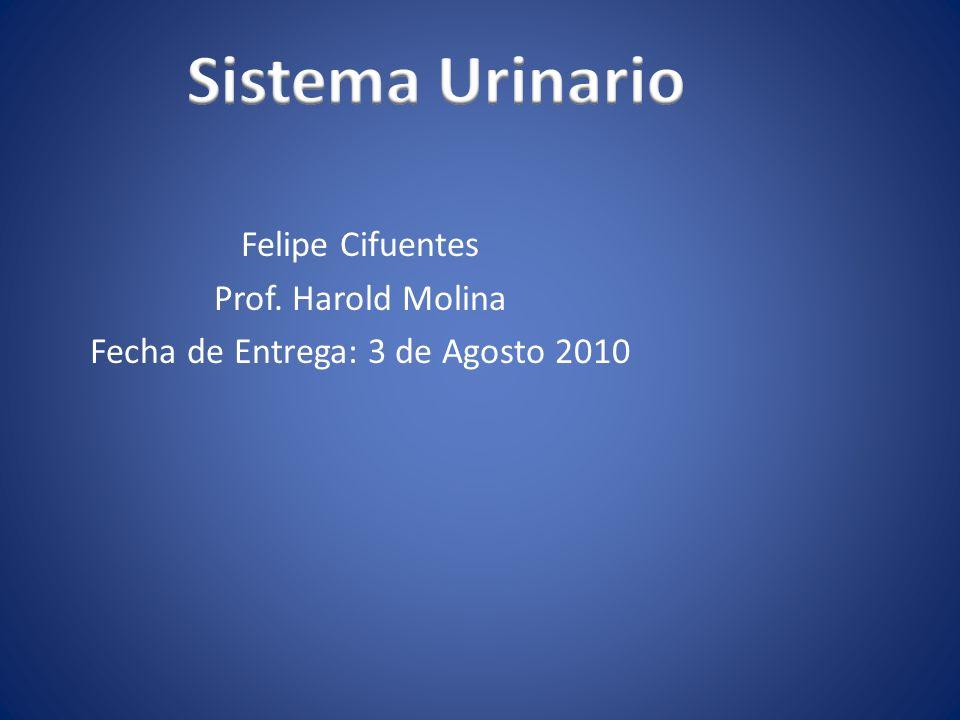 Felipe Cifuentes Prof. Harold Molina Fecha de Entrega: 3 de Agosto 2010