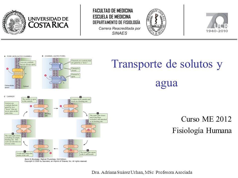 Transporte de solutos y agua Curso ME 2012 Fisiología Humana Dra. Adriana Suárez Urhan, MSc Profesora Asociada