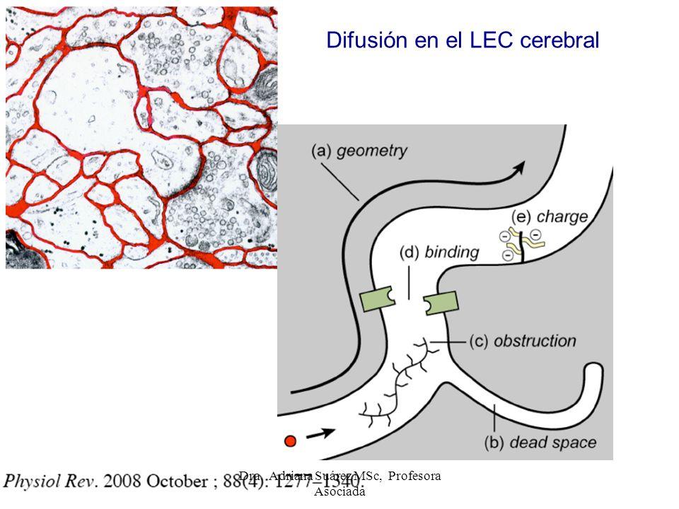 Difusión en el LEC cerebral Dra. Adriana Suárez MSc, Profesora Asociada