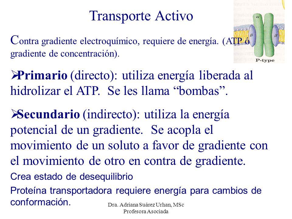 Transporte Activo C ontra gradiente electroquímico, requiere de energía. (ATP ó gradiente de concentración). Primario (directo): utiliza energía liber