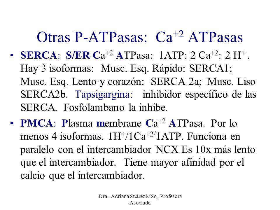 Otras P-ATPasas: Ca +2 ATPasas SERCA: S/ER Ca +2 ATPasa: 1ATP: 2 Ca +2 : 2 H +. Hay 3 isoformas: Musc. Esq. Rápido: SERCA1; Musc. Esq. Lento y corazón