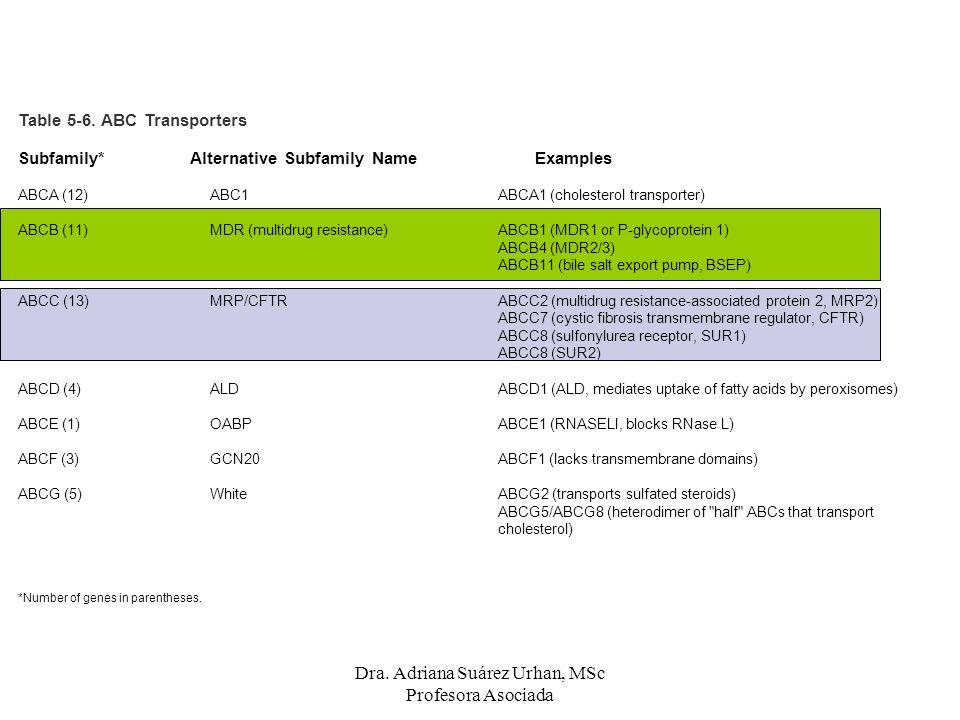 Table 5-6. ABC Transporters Subfamily* Alternative Subfamily Name Examples ABCA (12) ABC1 ABCA1 (cholesterol transporter) ABCB (11)MDR (multidrug resi