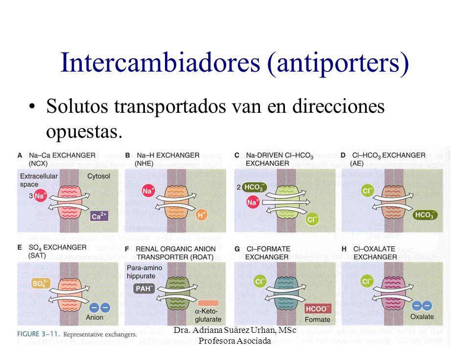Intercambiadores (antiporters) Solutos transportados van en direcciones opuestas. Dra. Adriana Suárez Urhan, MSc Profesora Asociada