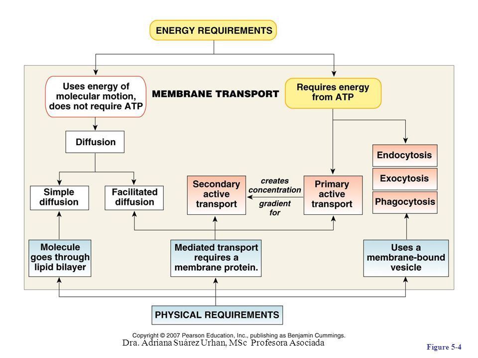Transporte Activo C ontra gradiente electroquímico, requiere de energía.