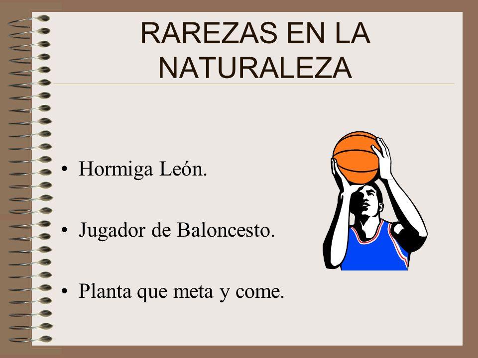 RAREZAS EN LA NATURALEZA Hormiga León. Jugador de Baloncesto. Planta que meta y come.