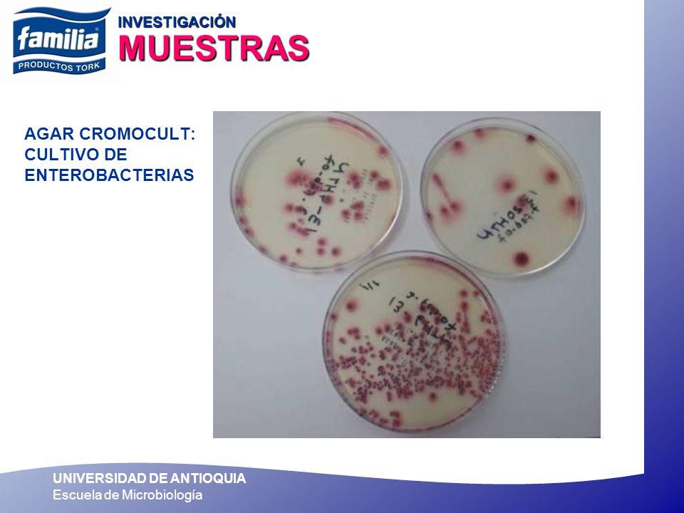 UNIVERSIDAD DE ANTIOQUIA Escuela de Microbiología AGAR CROMOCULT: CULTIVO DE ENTEROBACTERIAS INVESTIGACIÓN MUESTRAS