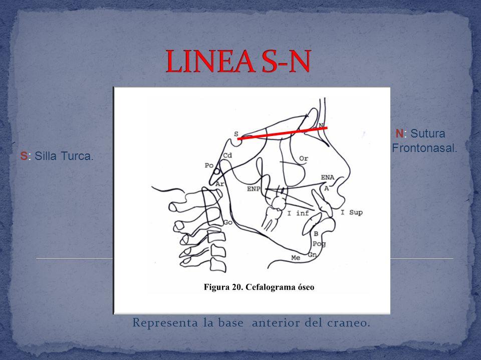 Condilos del occipital N: Nasion