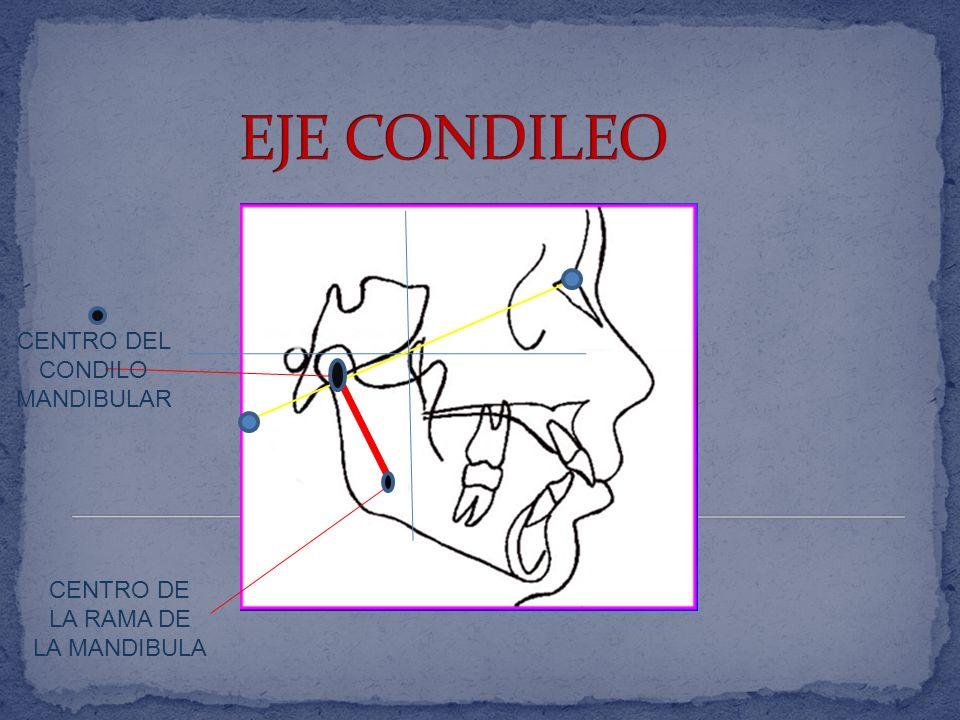 EXTENSION DEL CUERPO DE LA MANDIBULA CENTRO DE LA RAMA DE LA MANDIBULA