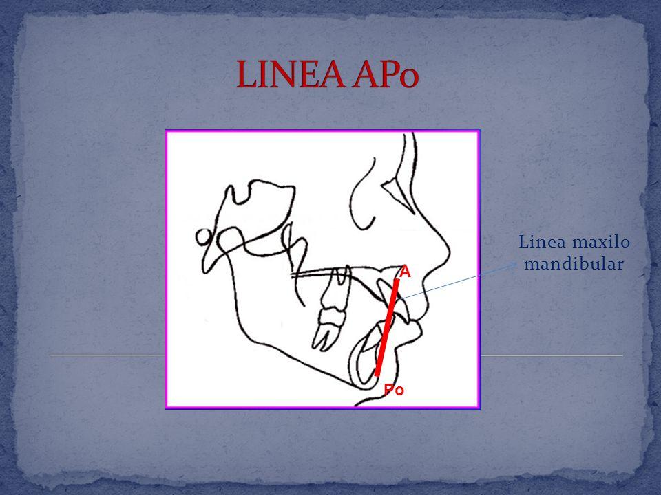 Punta del tejido blando de la nariz Punta del tejido blando del menton