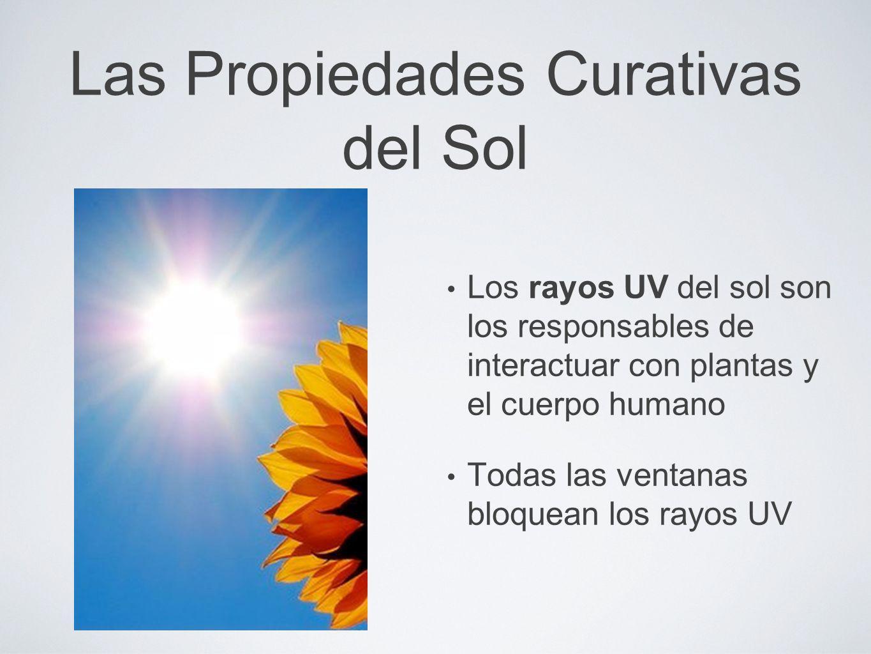 Las Propiedades Curativas del Sol Los rayos UV del sol son los responsables de interactuar con plantas y el cuerpo humano Todas las ventanas bloquean