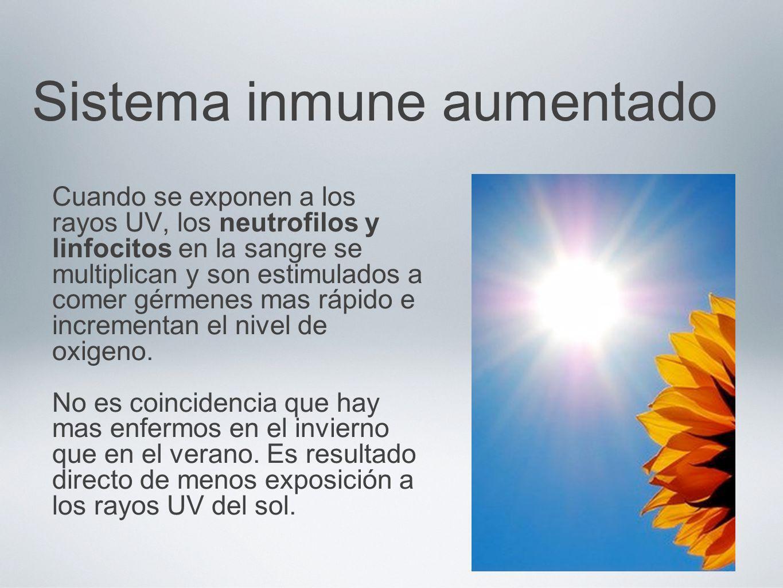 Sistema inmune aumentado Cuando se exponen a los rayos UV, los neutrofilos y linfocitos en la sangre se multiplican y son estimulados a comer gérmenes
