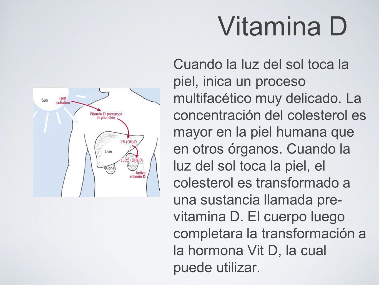 Vitamina D Cuando la luz del sol toca la piel, inica un proceso multifacético muy delicado. La concentración del colesterol es mayor en la piel humana