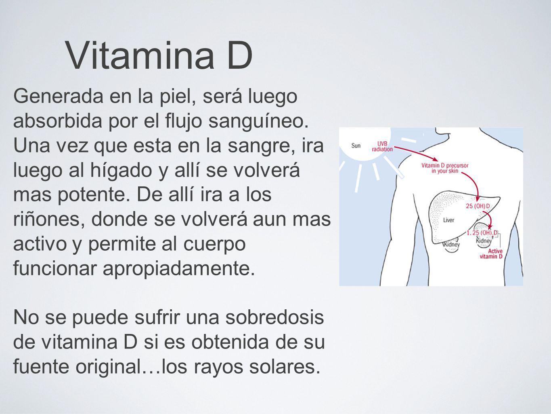 Vitamina D Generada en la piel, será luego absorbida por el flujo sanguíneo. Una vez que esta en la sangre, ira luego al hígado y allí se volverá mas