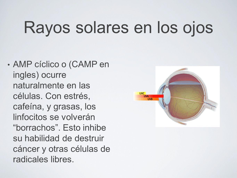 Rayos solares en los ojos AMP cíclico o (CAMP en ingles) ocurre naturalmente en las células. Con estrés, cafeína, y grasas, los linfocitos se volverán
