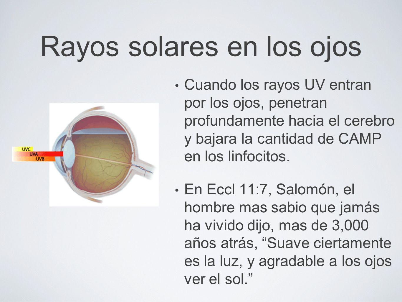 Rayos solares en los ojos Cuando los rayos UV entran por los ojos, penetran profundamente hacia el cerebro y bajara la cantidad de CAMP en los linfoci