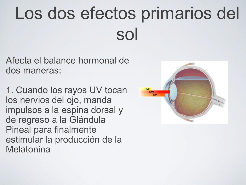 Los dos efectos primarios del sol Afecta el balance hormonal de dos maneras: 1. Cuando los rayos UV tocan los nervios del ojo, manda impulsos a la esp