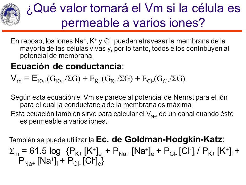 ¿Qué valor tomará el Vm si la célula es permeable a varios iones? En reposo, los iones Na +, K + y Cl - pueden atravesar la membrana de la mayoría de