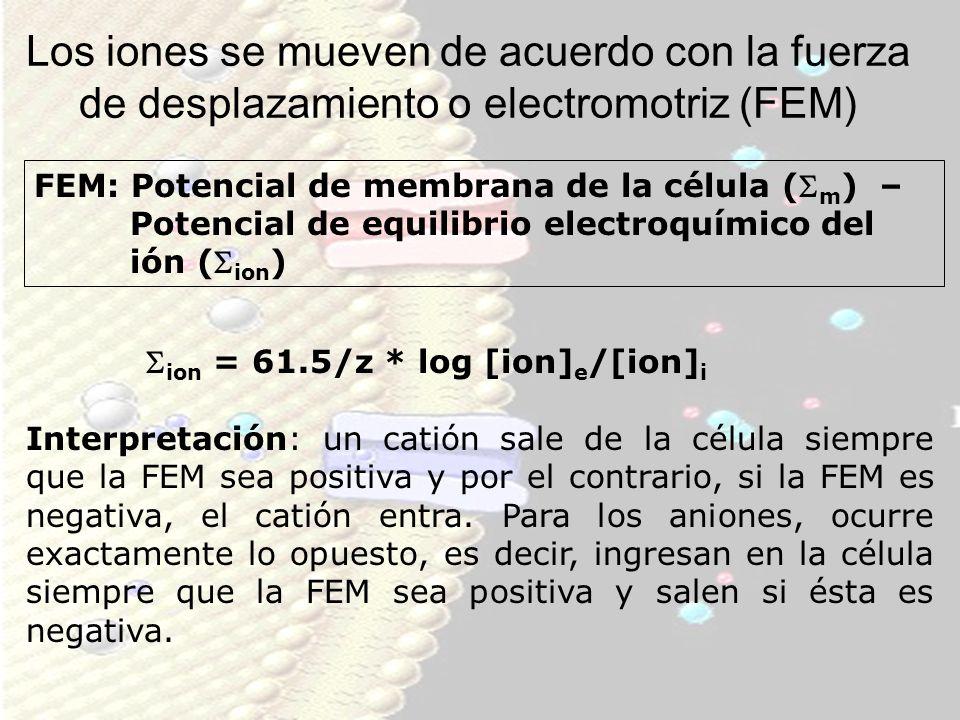 Los iones se mueven de acuerdo con la fuerza de desplazamiento o electromotriz (FEM) FEM: Potencial de membrana de la célula ( m ) – Potencial de equi