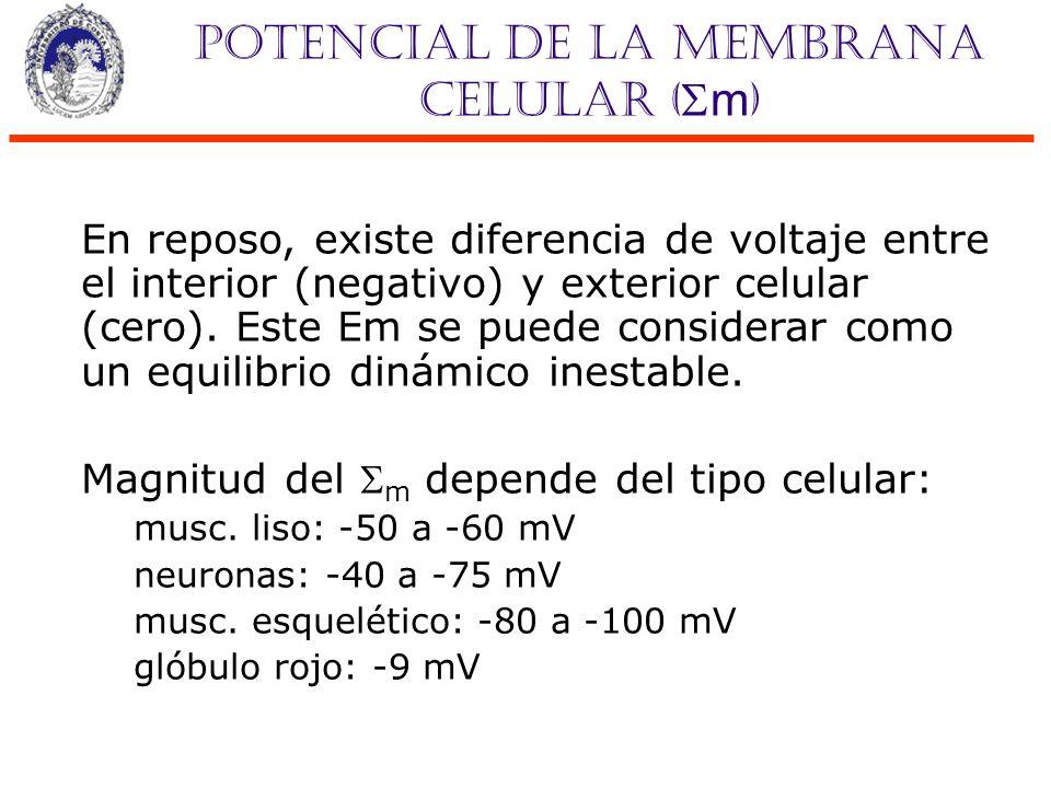 Potencial de la membrana celular (m) Debido al poco grosor de las membranas celulares el campo eléctrico es muy grande: E = Vm/d Si d=4 nm E= 250 000 V/cm ó 25 000 000 V/m Boron, 2da ed, pag.