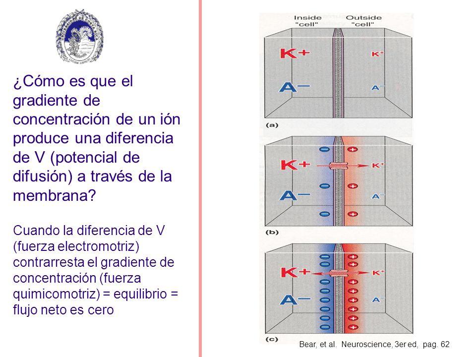 EJEMPLO Suponga que se abren canales de potasio en una neurona que presenta un m de – 60 mV y un K+ de –90 mV.