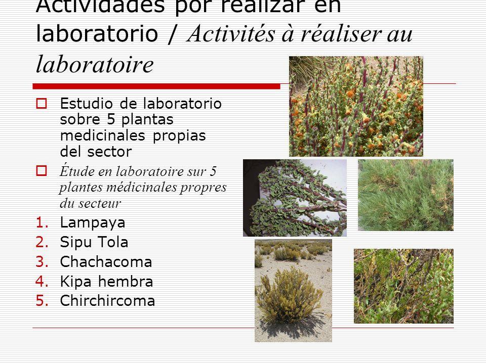 Actividades por realizar en laboratorio / Activités à réaliser au laboratoire Estudio de laboratorio sobre 5 plantas medicinales propias del sector Ét