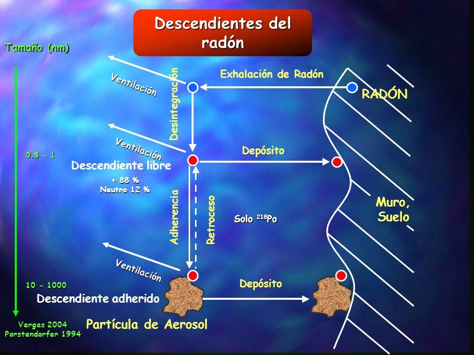 Descendientes del radón Muro, Suelo Exhalación de Radón Depósito Desintegración Adherencia Retroceso Partícula de Aerosol Descendiente libre RADÓN + 8