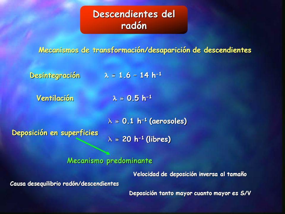 Descendientes del radón Mecanismos de transformación/desaparición de descendientes Desintegración Ventilación Deposición en superficies = 1.6 – 14 h -