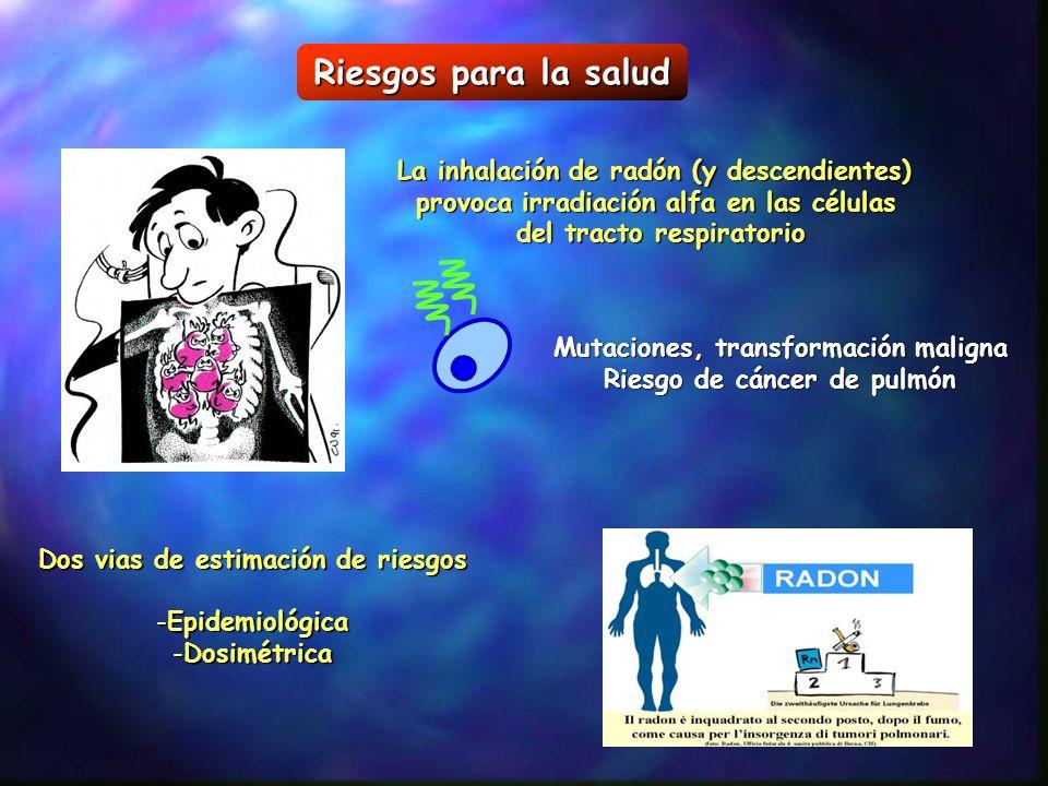 Riesgos para la salud La inhalación de radón (y descendientes) provoca irradiación alfa en las células del tracto respiratorio Mutaciones, transformac