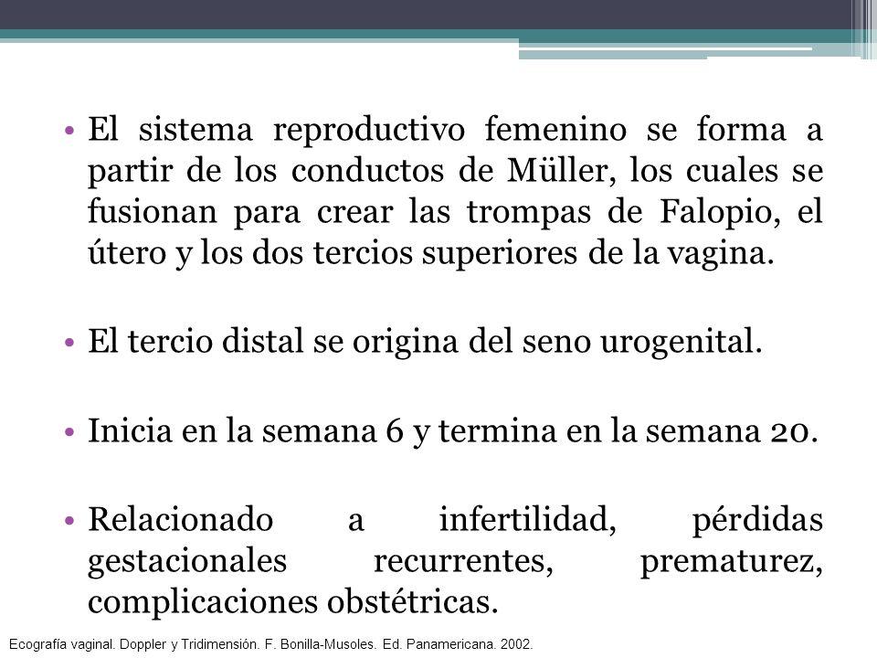 El sistema reproductivo femenino se forma a partir de los conductos de Müller, los cuales se fusionan para crear las trompas de Falopio, el útero y lo