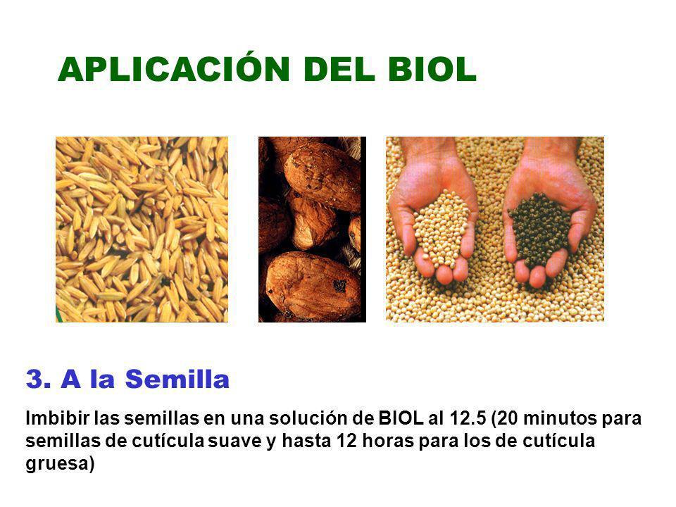 APLICACIÓN DEL BIOL 3. A la Semilla Imbibir las semillas en una solución de BIOL al 12.5 (20 minutos para semillas de cutícula suave y hasta 12 horas