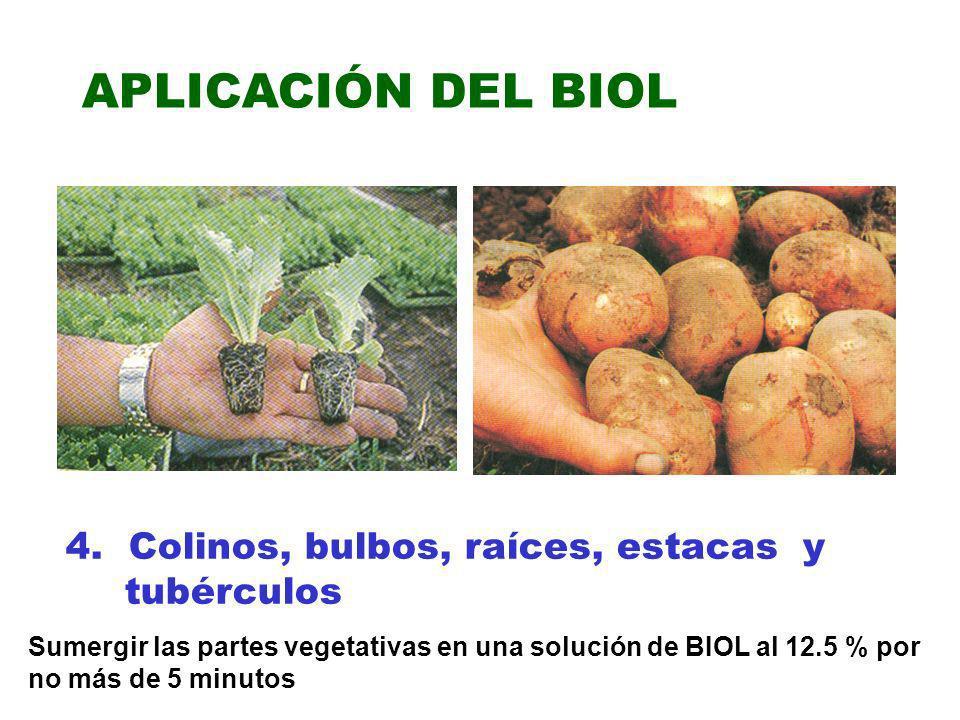APLICACIÓN DEL BIOL 4. Colinos, bulbos, raíces, estacas y tubérculos Sumergir las partes vegetativas en una solución de BIOL al 12.5 % por no más de 5