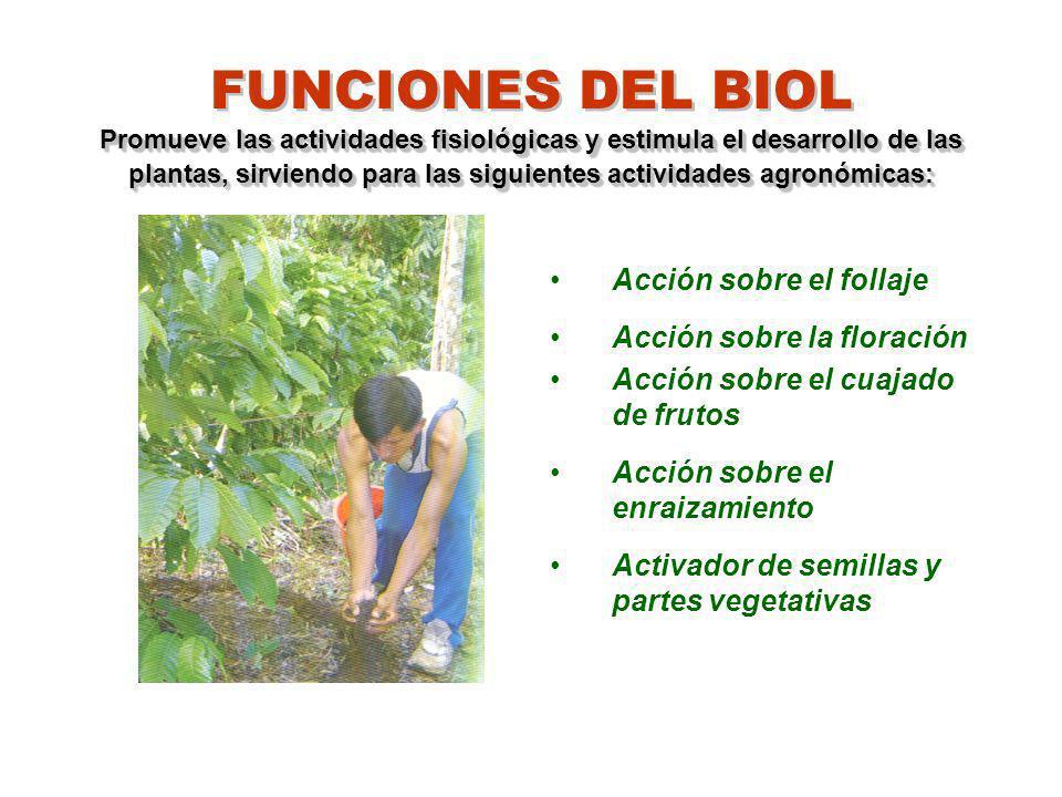 Promueve las actividades fisiológicas y estimula el desarrollo de las plantas, sirviendo para las siguientes actividades agronómicas: FUNCIONES DEL BI
