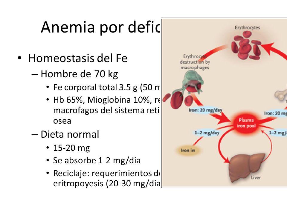 Anemia por deficiencia de Fe Homeostasis del Fe – Hombre de 70 kg Fe corporal total 3.5 g (50 mg/Kg) Hb 65%, Mioglobina 10%, resto almacenado en higad