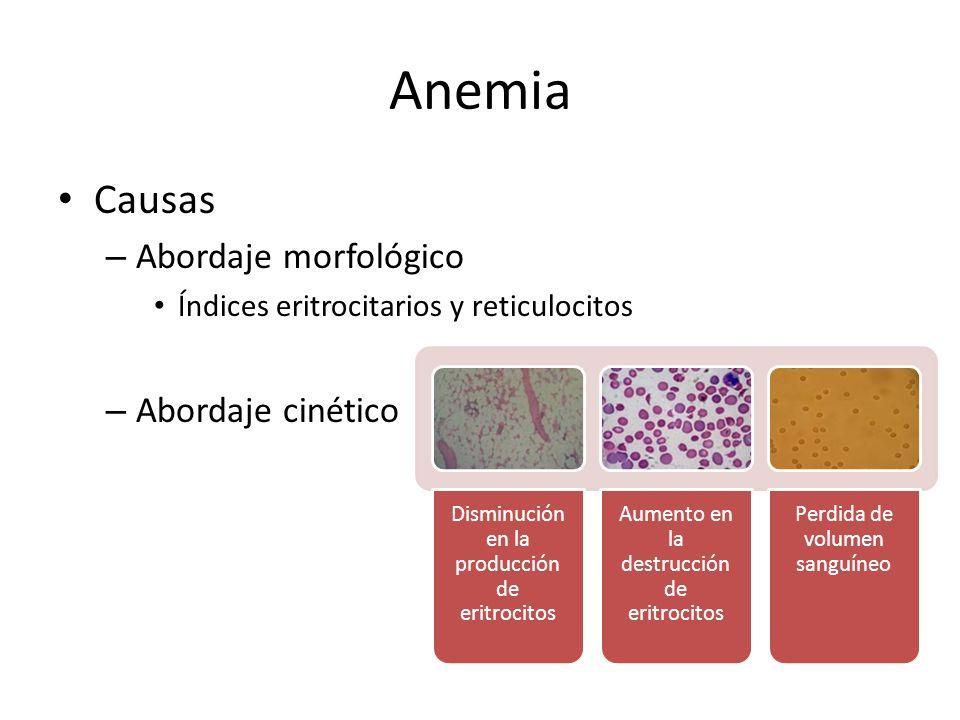 Anemia Causas – Abordaje morfológico Índices eritrocitarios y reticulocitos – Abordaje cinético Disminución en la producción de eritrocitos Aumento en