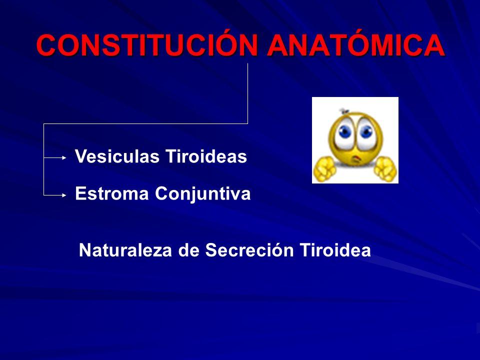 CONSTITUCIÓN ANATÓMICA Vesiculas Tiroideas Estroma Conjuntiva Naturaleza de Secreción Tiroidea
