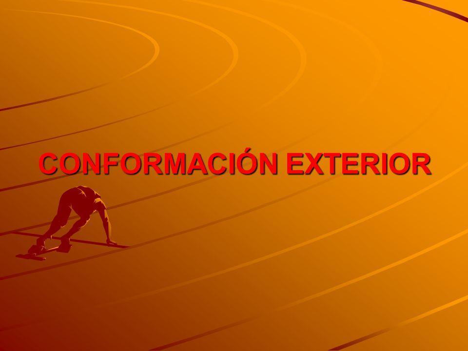 CONFORMACIÓN EXTERIOR