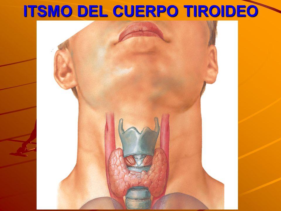 ITSMO DEL CUERPO TIROIDEO