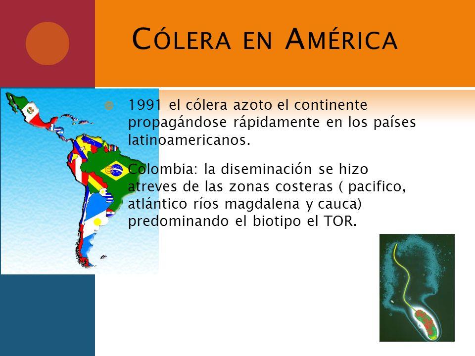 C ÓLERA EN A MÉRICA 1991 el cólera azoto el continente propagándose rápidamente en los países latinoamericanos. Colombia: la diseminación se hizo atre
