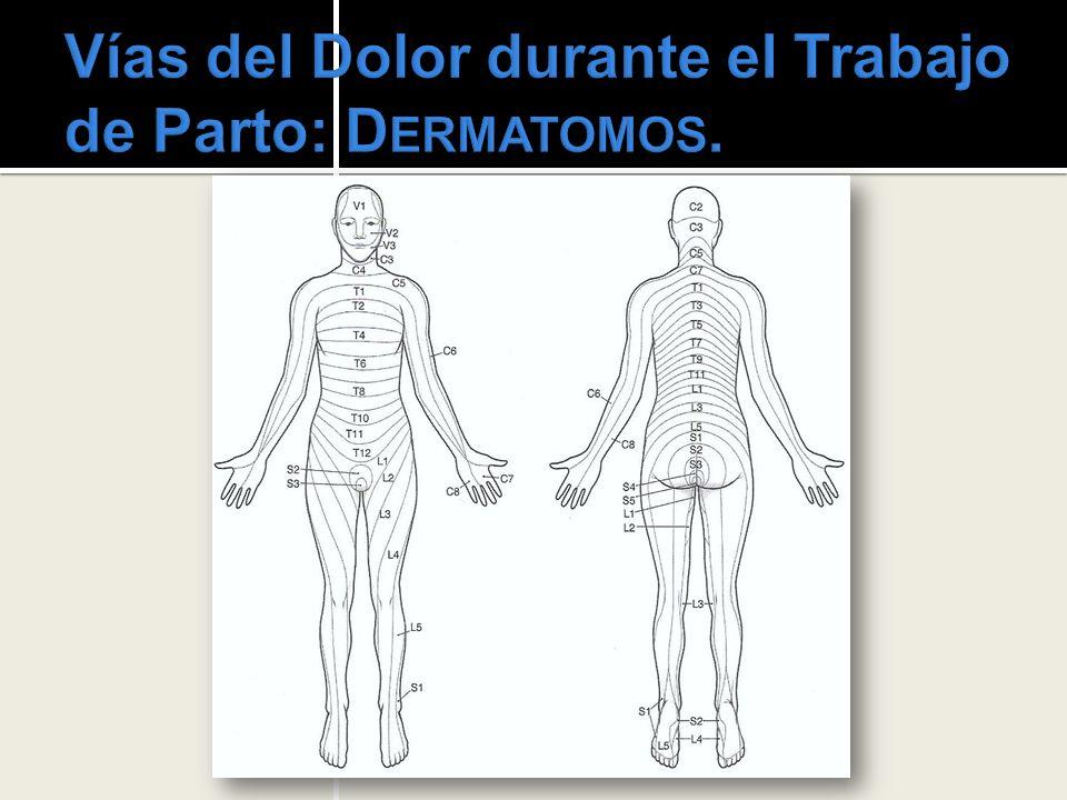 Anestesia Regional: B LOQUEO R AQUÍDEO (S UBARACNOIDEO ), C OMPLICACIONES.