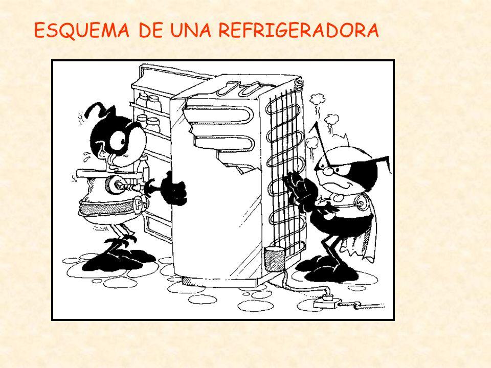 ESQUEMA DE UNA REFRIGERADORA