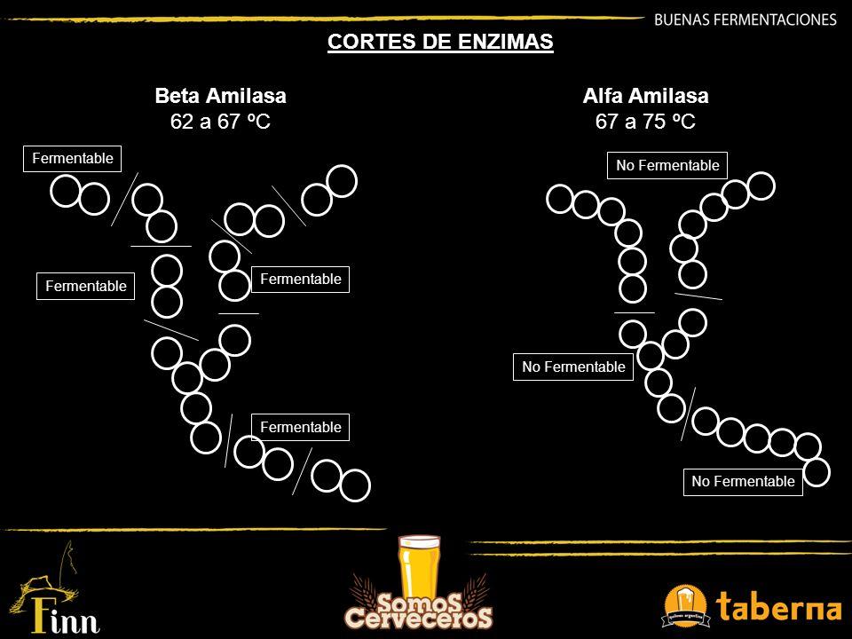 Beta Amilasa 62 a 67 ºC Fermentable Alfa Amilasa 67 a 75 ºC No Fermentable CORTES DE ENZIMAS