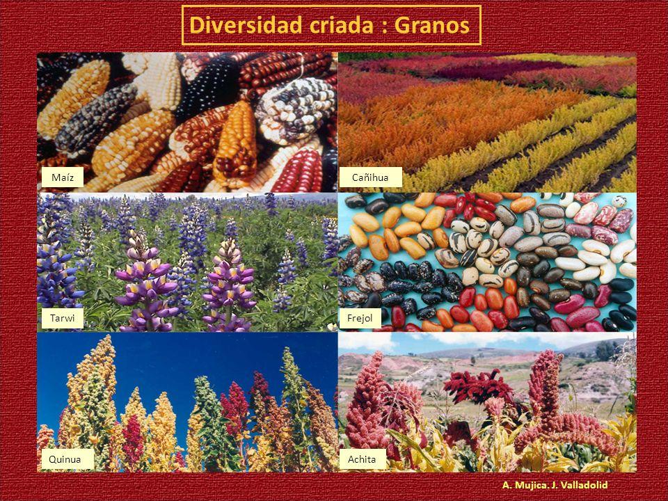 Diversidad criada : Granos A. Mujica. J. Valladolid MaízCañihua TarwiFrejol QuinuaAchita