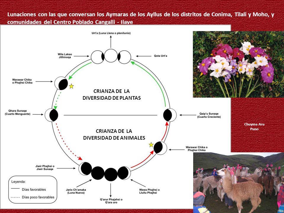 Secretos Lunaciones con las que conversan los Aymaras de los Ayllus de los distritos de Conima, Tilali y Moho, y comunidades del Centro Poblado Cangal