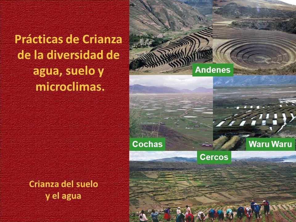 Crianza del suelo y el agua Prácticas de Crianza de la diversidad de agua, suelo y microclimas. Andenes CochasWaru Cercos