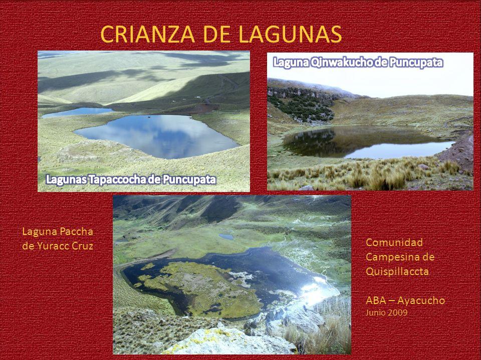 Laguna Paccha de Yuracc Cruz CRIANZA DE LAGUNAS Comunidad Campesina de Quispillaccta ABA – Ayacucho Junio 2009
